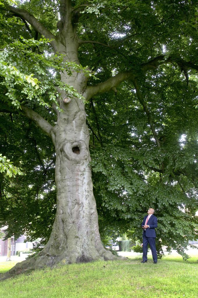 Ondanks alle veranderingen in de wereld groeit een boom in eigen tempo door. Ergens staat dit wel symbool voor hoe Karl Guha tegen het leven aankijkt. 'De menselijke natuur neigt naar het bekende, een technologische samenleving eist adaptatie.'