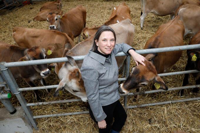 In de stal met Jersey-koeien (beter voor kaas) bij kaasmaker Henri Willig. 'Een echte – biologische – ondernemer die de tering naar de nering zet.'