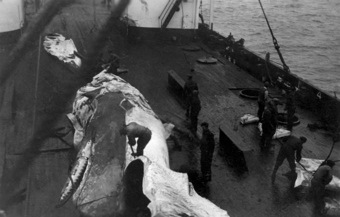 In twee uur tijd verdween deze reus van de zee in de kookketel van de Willem Barentsz