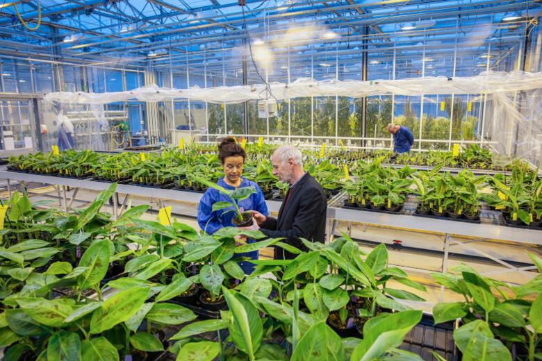 Plantum: 'Verlenging kwekersrecht belangrijk voor verduurzaming'