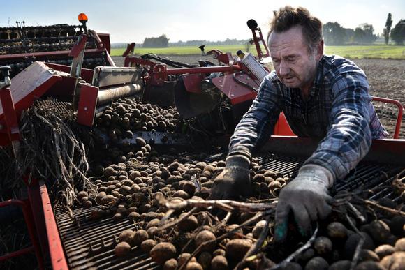 Waarom aardappelverwerker Avebe de energietransitie niet zomaar piept