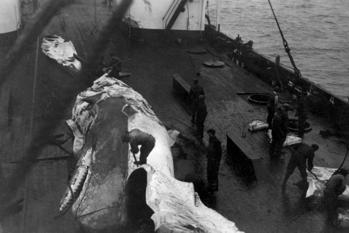 Het einde van de Nederlandse walvisvaart